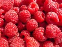 Red-ripe raspberry Royalty Free Stock Photos