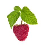 Red ripe raspberry with green leaves. Isolated on white background Royalty Free Stock Photography