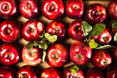 Red Ripe and Shiny Apples with green leaves may use as backgroun Stock Photo