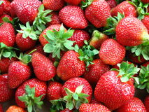 Red Ripe Strawberries. Beautiful pile of red and ripe strawberry fruit royalty free stock photography