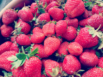 Red ripe strawberries Royalty Free Stock Image