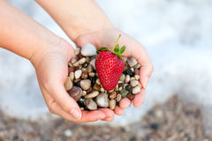 Red ripe strawberry and stones on woman hands Stock Images