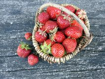 Red ripe strawberry in basket, Lithuania stock image