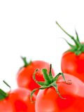 Red ripe tomato stock photography