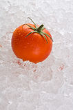 A red ripe tomato on a bed of ice. A red ripe tomato kept fresh on a bed of ice Stock Photo