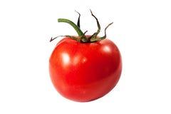 Red ripe tomato on white background. Stock Image