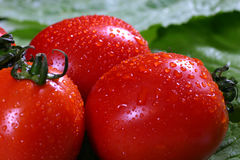 Red ripe tomatoes. Three freshly washed red ripe tomatoes, resting on lettuce leaves, ready to eat Stock Images