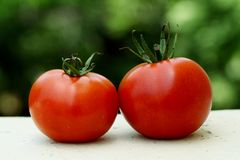 Red ripe tomatoes Stock Image