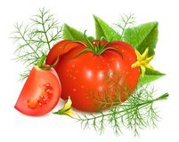 Red ripe tomatoes with dill. Royalty Free Stock Image