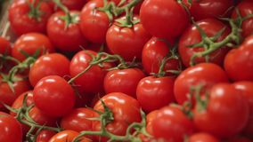 Red ripe tomatoes stock video