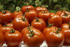 Red ripe tomatoes are heaped. Red ripe tomatoes with green peduncles are a great montain Royalty Free Stock Photos