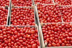 Red ripe tomatoes lie for sale in wooden boxes in the open air market. royalty free stock image