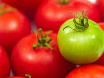 Red Ripe Tomatoes and One Green Tomato Royalty Free Stock Images