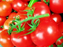 Red ripe tomatoes Stock Images