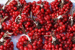 Viburnum. Red ripe viburnum tied in bundles Stock Image