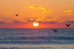 Red rising sun stock photo