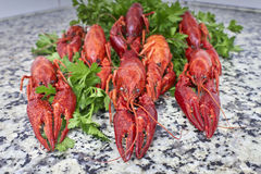 Red river crayfish on green parsley closeup Stock Image