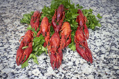 Red river crayfish on green parsley Stock Image