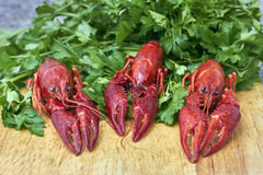 Red river crayfish with parsley on cutting board Royalty Free Stock Photography
