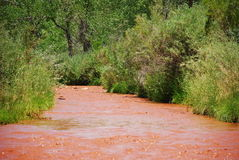 Red River Green Trees. Water level view of a red muddy river Stock Images