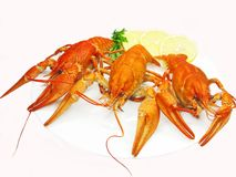Red river lobsters on plate with lemon Royalty Free Stock Photography
