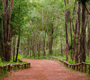 Red road in green forest Stock Photo