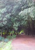Red road through tunnel of Rubber tree plantation Royalty Free Stock Photography