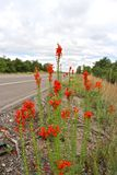 Red Roadway Wildflowers Royalty Free Stock Photography