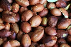 Red roasted peanuts, some open, with and without peel. Peanut, groundnut, goober. Grain legume with high oil content, an oil crop. Edible seeds, salty or used royalty free stock photo
