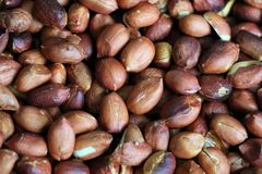 Red roasted peanuts, some open, with and without peel. Peanut, groundnut, goober. Grain legume with high oil content, an oil crop. Edible seeds, salty or used royalty free stock image