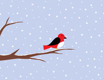 Red robin on a birch in snow Royalty Free Stock Photo