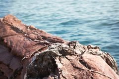 Red rock and blue sea selective focus nature background. Red rock and blue sea selective focus full frame nature background royalty free stock images