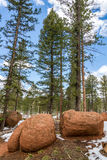 Red rock campground pike national forest colorado springs woodl royalty free stock photography