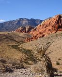 Red Rock Canyon Stock Photos