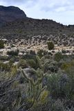 Red Rock Canyon Conservation Area, Nevada stock photo