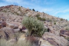 Red Rock Canyon Conservation Area, Nevada, USA Royalty Free Stock Photography
