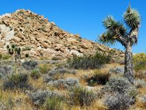 Red Rock Canyon Desert Royalty Free Stock Image