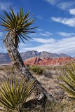 Red Rock Canyon Framed by Cactus Royalty Free Stock Photos