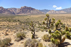 Red Rock Canyon landscape Nevada. Royalty Free Stock Photo