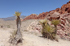 Red Rock canyon landscape Nevada. Royalty Free Stock Image