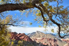 Yellow leaves autumn tree branch Red Rock desert landscape Royalty Free Stock Photos
