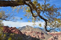 Yellow leaves autumn tree branch Red Rock desert landscape Royalty Free Stock Photo