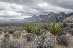 Red Rock Canyon National Conservation Area Royalty Free Stock Photos