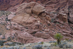 Red Rock canyon , Nevada. Royalty Free Stock Images