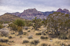 Red Rock Canyon. Stock Images