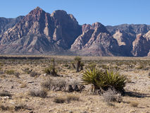 Red Rock Canyon near Las Vegas Nevada. Desert with mountains in background. Desert plants in foreground Royalty Free Stock Photo
