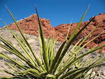 Red Rock Canyon Nevada Royalty Free Stock Images