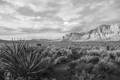 Red Rock Canyon Nevada Black and White. Spring morning in Red Rock Canyon National Conservation area near Las Vegas in black and white Stock Photos