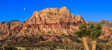 Red Rock Canyon Pano Royalty Free Stock Photography