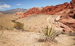 Red rock canyon Royalty Free Stock Photography
